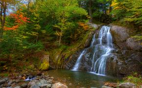 foresta, alberi, autunno, cascata, pietre, piccolo fiume, paesaggio, natura
