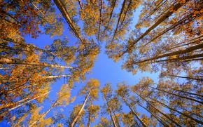 autunno, alberi, incoronare, superiore, natura