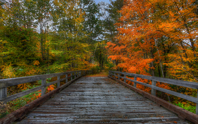 autumn, trees, forest, bridge, landscape