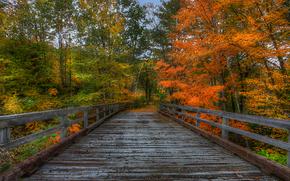 autunno, alberi, foresta, ponte, paesaggio