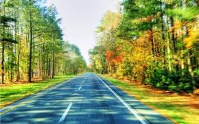 дорога, лес, деревья, пейзаж, скорость