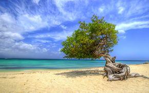 море, берег, песок, небо, дерево, пейзаж