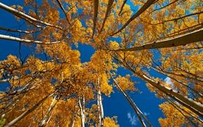 autunno, cielo, alberi, superiore, incoronare, natura