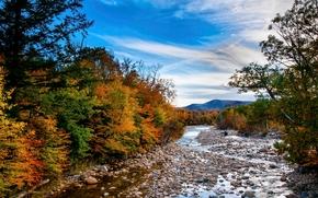 秋, 河, 树, 石头, 景观