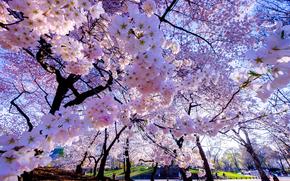 сад, парк, деревья, цветы