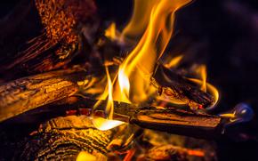 FALO, fuoco, legna da ardere