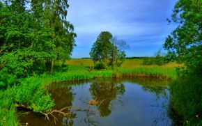 étang, arbres, ciel, domaine, nature