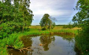 étang, arbres, ciel, domaine, nature, paysage