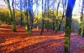 秋, 森林, 树, 性质
