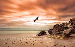 mare, puntellare, Rocce, tramonto, uccello, paesaggio