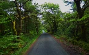 route, forêt, arbres, paysage