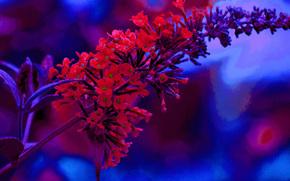 flor, tallo, Macro, flora