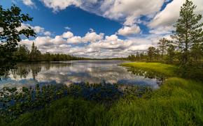 川, 森, 木, 雲, 風景