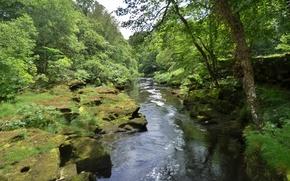 rivière, forêt, arbres, nature