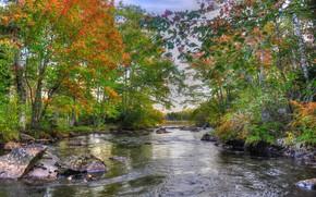 bosque, árboles, otoño, río, piedras, paisaje