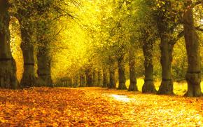 jesień, park, drzew, droga, charakter