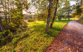 droga, jesień, drzew, krajobraz
