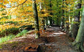 autumn, road, trees, park, landscape