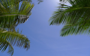 Palms, ciel, nature