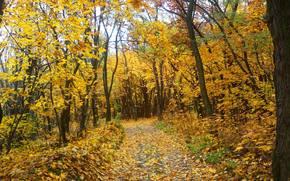 road, autumn, trees, nature