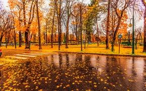 parque, árboles, otoño, carretera