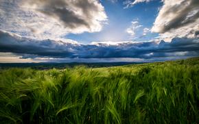 フィールド, 空, トウモロコシの穂, 風景