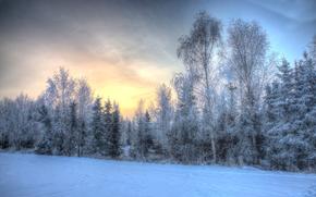 zachód słońca, zima, drzew, krajobraz