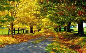 stradale, autunno, alberi, paesaggio