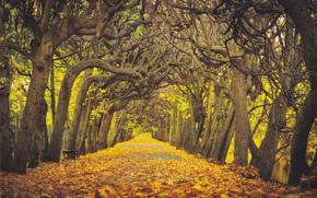 carretera, otoño, árboles, paisaje