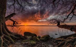 puesta del sol, lago, costa, árboles, paisaje