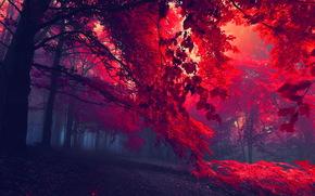 森林, 秋, 树, 雾