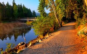 road, forest, small river, bridge, landscape