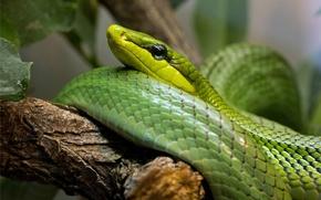 змея, дерево, макро