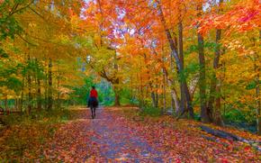 floresta, outono, estrada, parque, árvores, paisagem