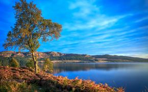 jezioro, Góry, Brzeg, drzewo, krajobraz