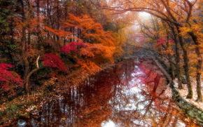 осень, сад, деревья, канал, пейзаж