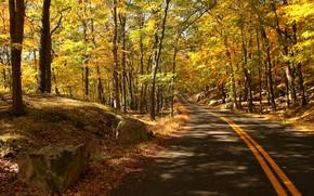 bosque, carretera, árboles, otoño