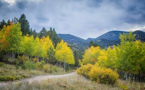 осень, горы, деревья, дорога, пейзаж