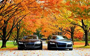Audi R8, осень, Ауди