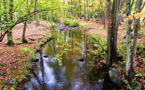 fiume, foresta, autunno, alberi, natura