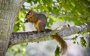écureuil, arbre, animaux