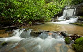 forêt, cascade, petite rivière, arbres, Rocks, nature