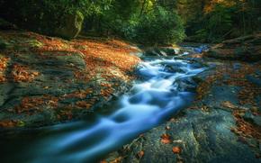 river, forest, Rocks, nature