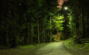 森林, 公园, 道路, derevtya, 夜, 光, 灯笼