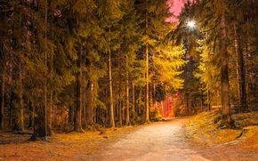 foresta, parco, stradale, derevtya, notte, chiaro, lanterna