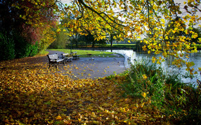 autunno, parco, pond, alberi, fogliame, paesaggio