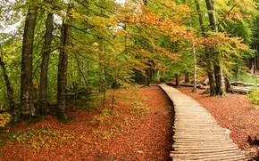 floresta, árvores, outono, piso de madeira, natureza
