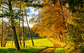 forest, road, autumn, trees, nature