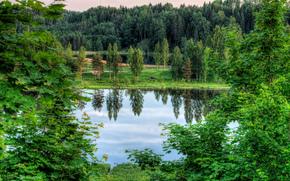 lago, alberi, Estonia, paesaggio