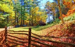 осень, лес, деревья, забор, домик, пейзаж